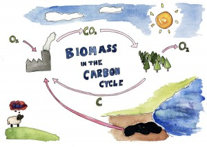 Biomass in the Carbon Cycle